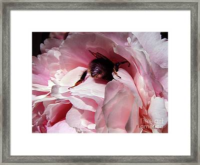 The Lost Bee  Framed Print