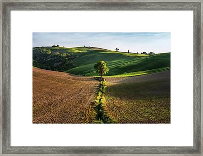 The Lost Love Tree Framed Print