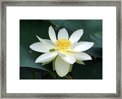 The Lotus Flower The Frog And The Bee Framed Print