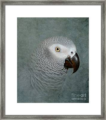 The Love Of A Gray Framed Print by Betty LaRue