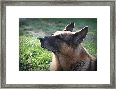 The Love Of An Old Dog Framed Print