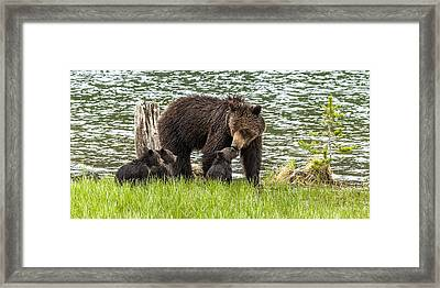 The Love Of Mama Bear Framed Print