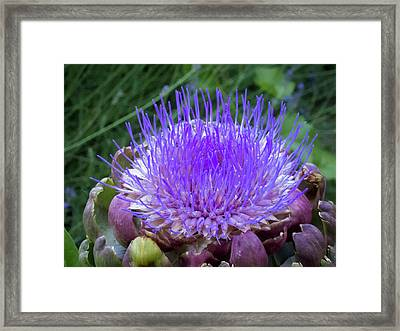 The Loveliness Of An Artichoke Framed Print by Mary Lee Dereske