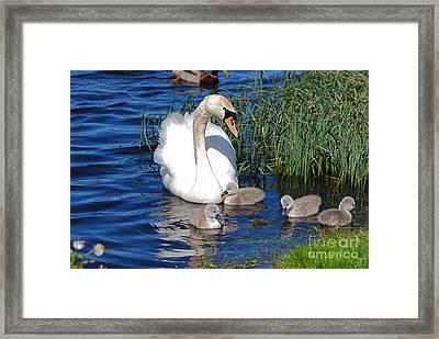 The Lovely Mrs Swan And Family Framed Print by Doug Thwaites