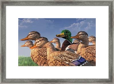 The Lucky Mallard Framed Print