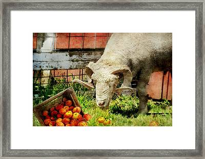 The Lunch Box Framed Print