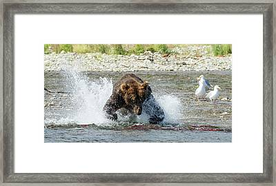Framed Print featuring the photograph The Lunge by Cheryl Strahl