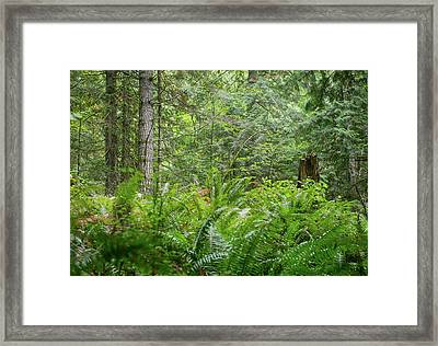 The Lush Forest Framed Print