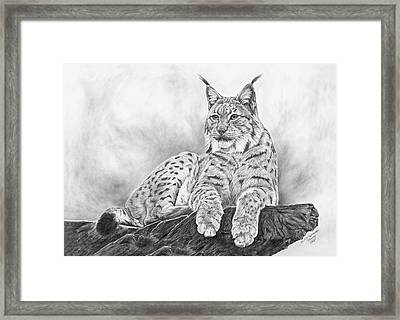 The Lynx 2017 Version Framed Print