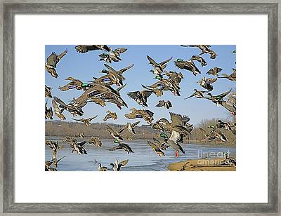 The Mad Rush Framed Print