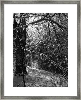 The Magic Pond Framed Print by Garth Glazier