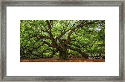The Magical Angel Oak Tree Panorama  Framed Print