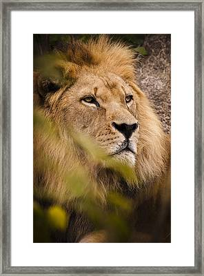 The Magnificent Cat Framed Print by Chad Davis