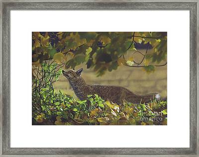 The Fantastic Mr Fox Framed Print
