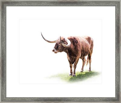 The Majestic Longhorn Framed Print by David and Carol Kelly