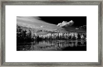 The Majestic Tamaracks At Woodcraft Camp Framed Print by David Patterson