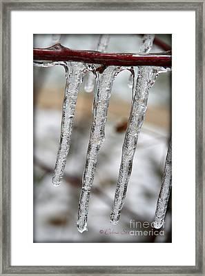 The Makings Of Winter Framed Print by Debra Straub