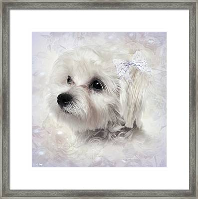 The Maltese Framed Print