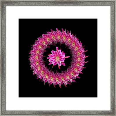 The Mandala Of Pink Tropical Flower Framed Print by Jacqueline Migell