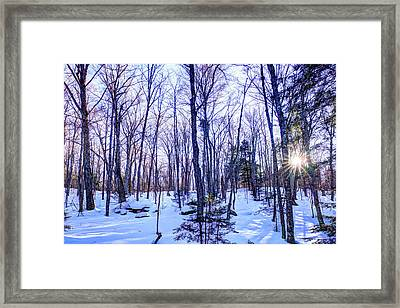 The Many Colors Of Winter 2 Framed Print by David Patterson