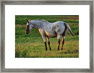 The Mare Framed Print