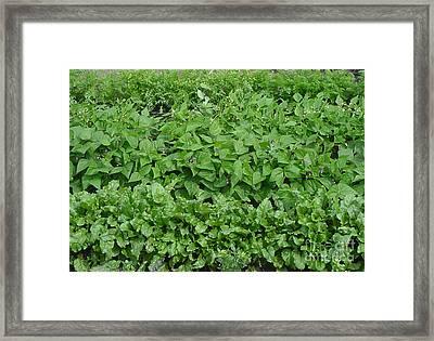 The Market Garden Landscape Framed Print