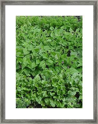 The Market Garden Portrait Framed Print