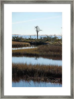 The Marsh Framed Print