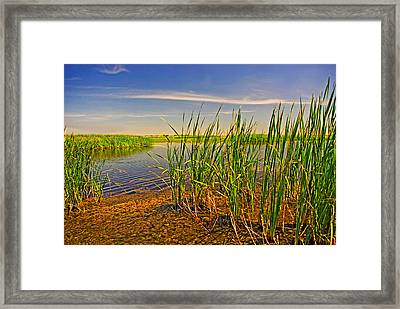 The Marshes Of Brazoria Framed Print