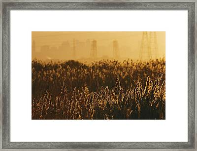 The Marshes Of The Meadowlands Are Lit Framed Print