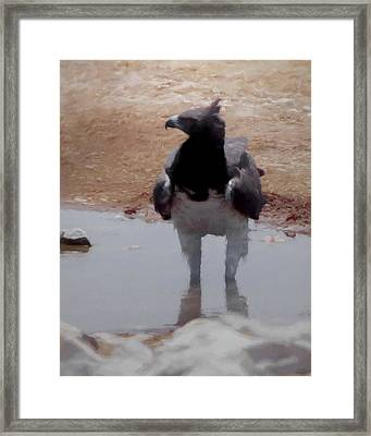 The Martial Eagle Framed Print