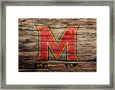 The Maryland Terrapins  Framed Print by Brian Reaves