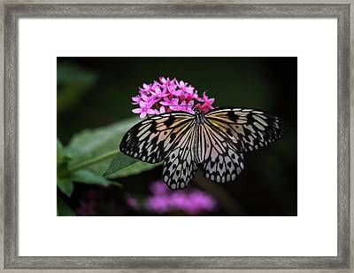Framed Print featuring the photograph The Master Calls A Butterfly by Cindy Lark Hartman