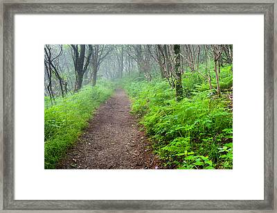 The Means - Craggy Gardens Lush Green Mountain Trail Framed Print by Mark VanDyke