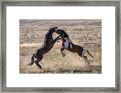 This Means War Framed Print by Sandy Sisti