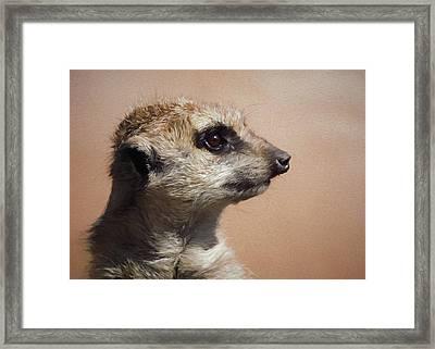The Meerkat Da Framed Print