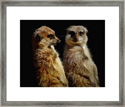 The Meerkats Framed Print