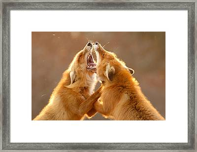 The Meeting _ Red Fox Fight Framed Print by Roeselien Raimond