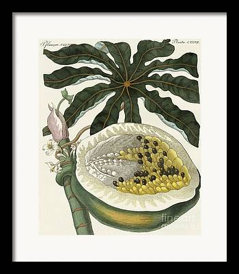 Tree Plantation Drawings Framed Prints