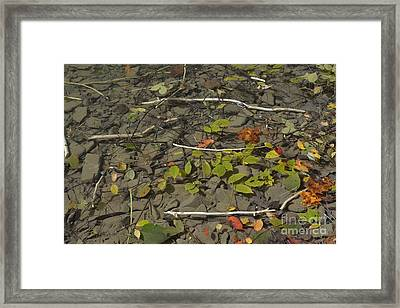 Framed Print featuring the photograph The Menu by Randy Bodkins