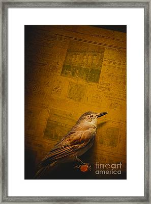 The Messenger Bird Framed Print by Jorgo Photography - Wall Art Gallery