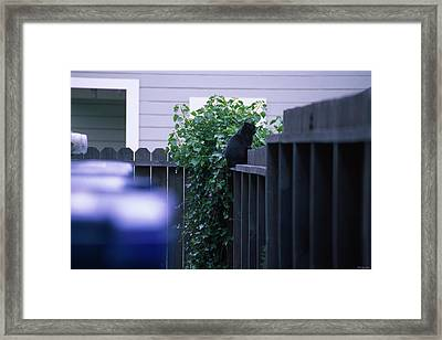 The Meter Cat - Fort Bragg California Framed Print by Soli Deo Gloria Wilderness And Wildlife Photography