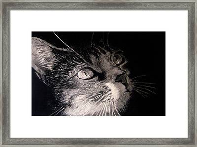 The Midnight Glow Framed Print