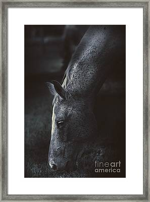 The Midnight Stallion Framed Print by Jorgo Photography - Wall Art Gallery