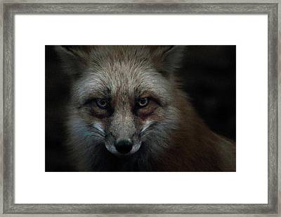 In The Dark Of The Night Framed Print