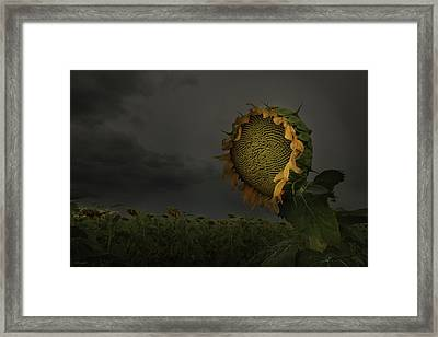 A Sign Of Hope Among A Crowd Of Despair Framed Print