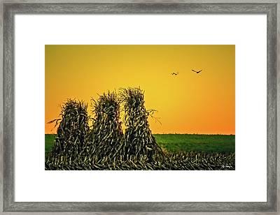 The Migration Of Summer Framed Print