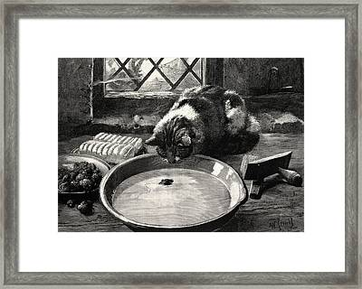 The Milky Way Or A Cat Looking At A Mouse Framed Print by English School