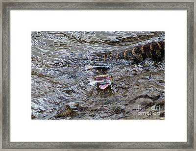 The Minnow And The Fox Snake Framed Print by Laura Birr Brown