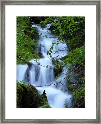 The Misty Brook Framed Print